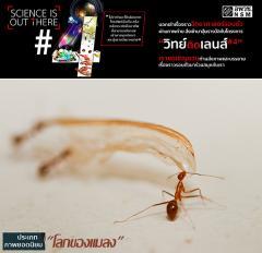 """ประกวดภาพถ่ายวิทยาศาสตร์ """"วิทย์ติดเลนส์"""" ประเภทยอดนิยม หัวข้อ """"โลกของแมลง"""""""