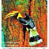"""ประกวดภาพศิลป์ วันรักนกเงือก 2560 หัวข้อ """"วันรักนกเงือก"""""""